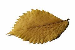 Geel blad royalty-vrije stock afbeelding