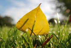 Geel blad stock foto