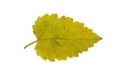 Geel blad dat op witte achtergrond wordt geïsoleerdz Royalty-vrije Stock Afbeeldingen
