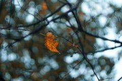 Geel blad in de herfstbos in september royalty-vrije stock afbeelding