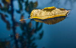 Geel blad die in water drijven Stock Foto