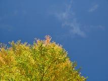 Geel blad en blauwe hemel Royalty-vrije Stock Afbeeldingen