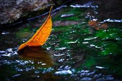 Geel blad in het water Royalty-vrije Stock Afbeeldingen