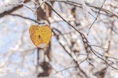 Geel blad met sneeuw tegen onduidelijk beeld boswintertijd royalty-vrije stock afbeeldingen
