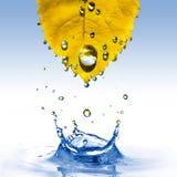 Geel blad met waterdalingen die op wit worden geïsoleerdo Stock Afbeeldingen
