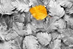 Geel blad onder zwart-witte bladeren Stock Foto