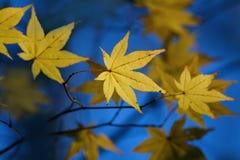 Geel blad op blauw Stock Afbeelding