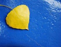 Geel blad op blauwe verf Stock Foto