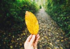 Geel blad op de achtergrond van de herfstbos Royalty-vrije Stock Foto
