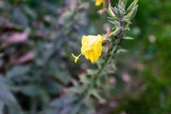 Geel blad op een boom stock foto's