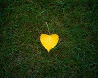 Geel blad op groen gras royalty-vrije stock fotografie