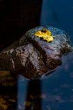 Geel blad op rots Royalty-vrije Stock Fotografie