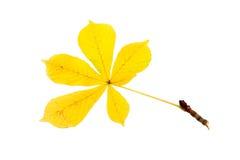 Geel blad van een kastanje royalty-vrije stock afbeelding