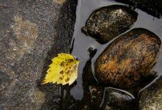 Geel blad in water Stock Fotografie