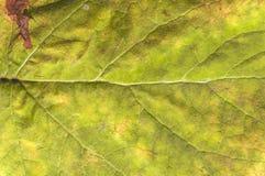 Geel blad zoals de detail natuurlijke lente of de herfsttextuur stock foto