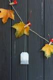 Geel bladeren en theezakje op wasknijpers Stock Foto
