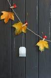 Geel bladeren en theezakje op wasknijpers royalty-vrije stock afbeeldingen