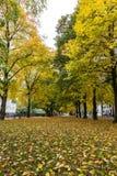 Geel bladerentapijt op de herfsttijd in München Stock Foto