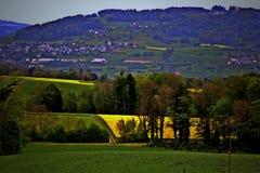 Geel bloeiend canolagebied Stock Afbeelding