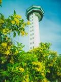 Geel bloem en waarnemingscentrum stock afbeeldingen