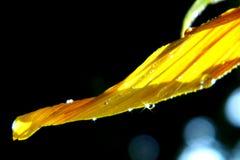 Geel bloemblaadje stock afbeelding