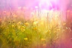 Geel bloemen en gras Royalty-vrije Stock Foto