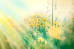 Geel bloemen en gras Royalty-vrije Stock Foto's