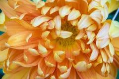 Geel bloemendetail Stock Afbeelding