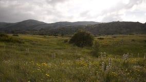 Geel bloemengebied in nationaal park Galicica stock videobeelden