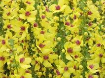 Geel bloemenpatroon Royalty-vrije Stock Afbeeldingen
