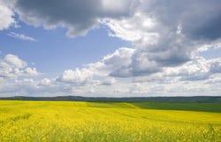 Geel bloemgebied Royalty-vrije Stock Foto's