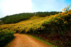 Geel bloemgebied in de zomer Stock Afbeeldingen