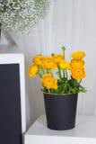 Geel boeket van ranunculuses in zwarte mand Royalty-vrije Stock Fotografie