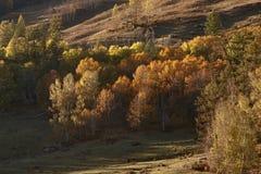Geel bos 2 in de herfst Stock Fotografie