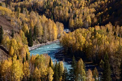 Geel bos 2 in de herfst Stock Foto's