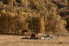 Geel bos in de herfst met één houten huis Stock Fotografie