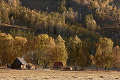 Geel bos in de herfst met houten huis twee Stock Foto