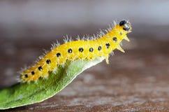 Geel Caterpillar royalty-vrije stock afbeelding