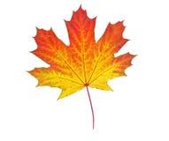 Geel de herfstblad Royalty-vrije Stock Afbeeldingen