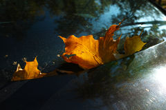 Geel de herfstblad Stock Foto's