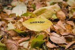 Geel de herfstblad met het woord September in groene en gele bladeren gevallen van de boom Droge bladeren ter plaatse De herfst b stock fotografie