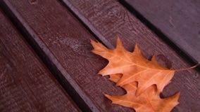 Geel de herfstblad op een bank stock video