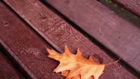 Geel de herfstblad op een bank stock footage