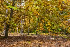 Geel de herfstbos royalty-vrije stock fotografie