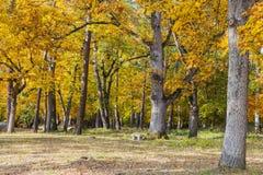 Geel de herfstbos royalty-vrije stock afbeeldingen