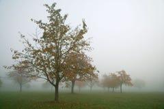 Geel de herfstlandschap in de mist Royalty-vrije Stock Afbeelding