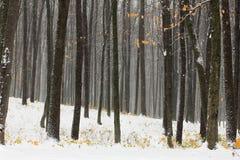Geel die de herfstbos met sneeuw wordt behandeld Stock Fotografie