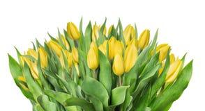 Geel die tulpenboeket, op wit wordt geïsoleerd Stock Afbeeldingen