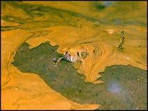 Geel-doen zwellen pad Stock Foto's