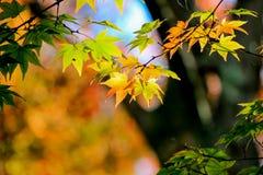 Geel doorbladert met boomachtergrond Royalty-vrije Stock Afbeeldingen